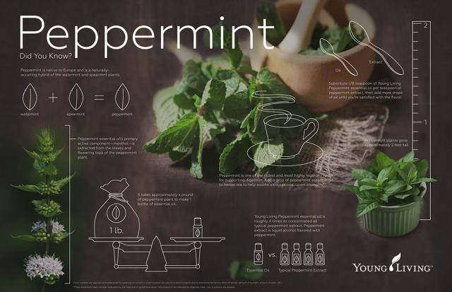 Peppermint-YLEO